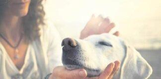 PETA INDIA, Pet lovers